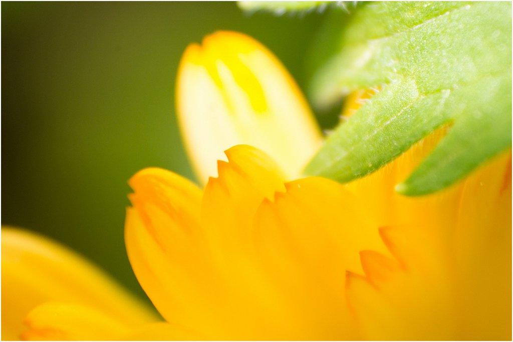 2014-05-20-Garten-Elternhaus-Aachen-Schmithof-03-von-04.jpg