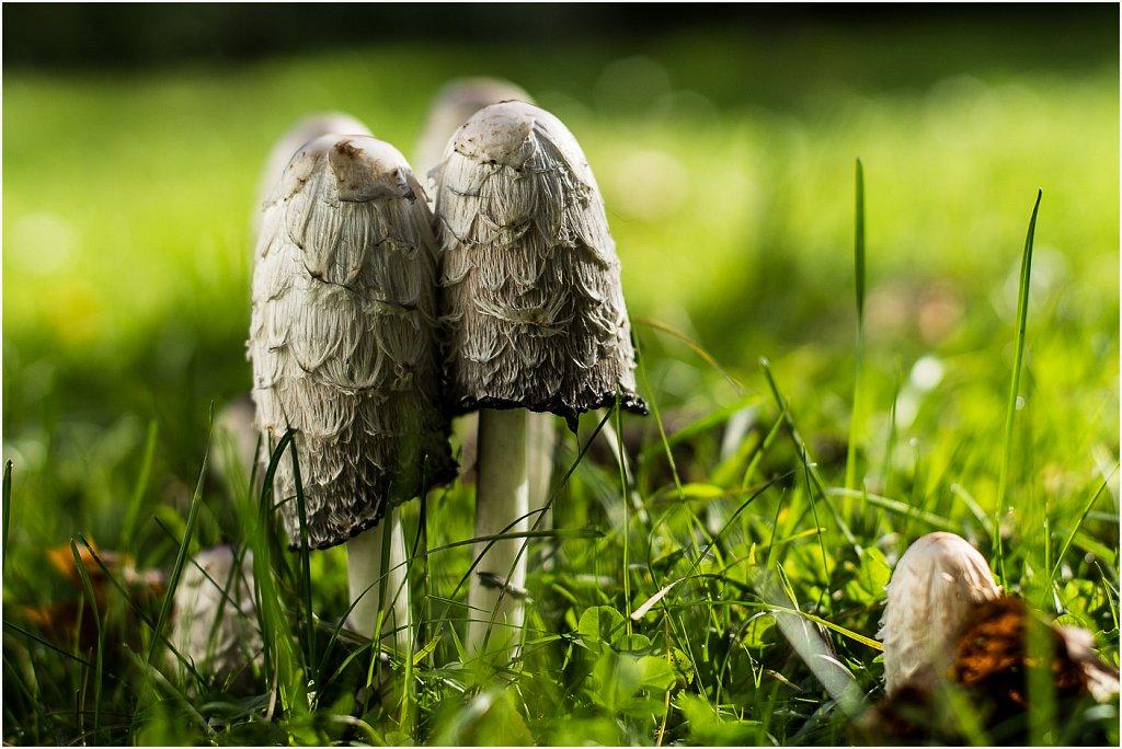 Pilze im Garten - Aachen