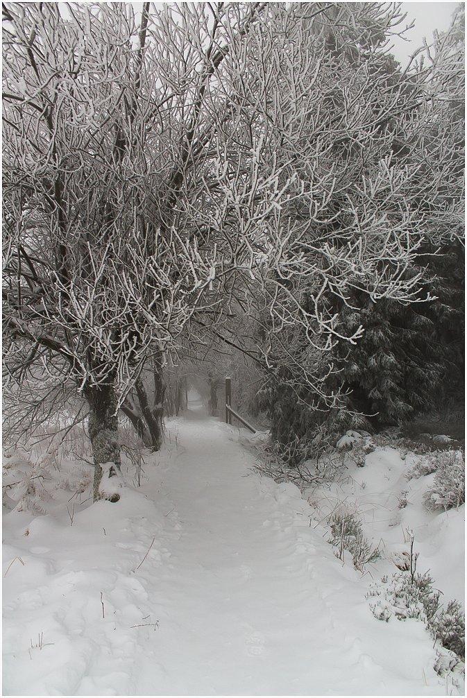 Winterwalk - Hohes Venn - Belgien